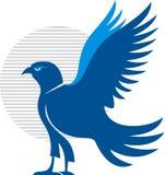 Aigle américain Images libres de droits