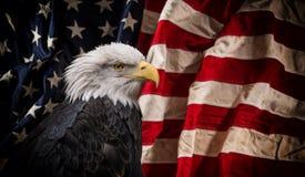 Aigle chauve américain avec l'indicateur Photo stock