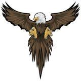 Aigle chauve avec le chemin de découpage Images stock
