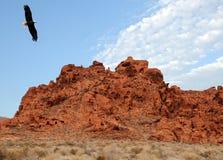 Aigle chauve dans le sud-ouest photos stock