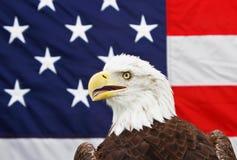 Aigle chauve et indicateur américain Photos libres de droits