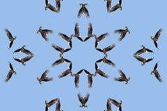 Aigle chauve kaléïdoscopique Photographie stock