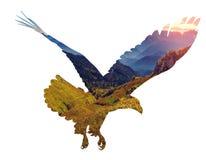Aigle chauve sur le fond blanc illustration libre de droits