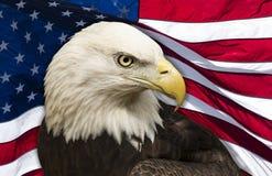 Aigle chauve sur le fond d'indicateur américain image libre de droits