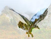 Aigle chauve sur le fond de paysage de montagne images libres de droits