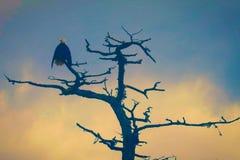 Aigle de coucher du soleil après une tempête image libre de droits