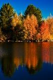 aigle de crête d'automne Photographie stock libre de droits