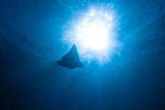 Aigle de mer Photo libre de droits