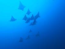 Aigle de mer Images stock