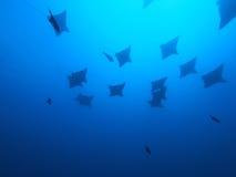 Aigle de mer Photos stock