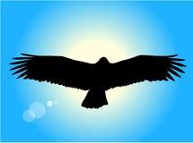 Aigle de vol Photographie stock libre de droits