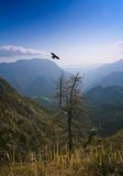 Aigle de vol Image libre de droits