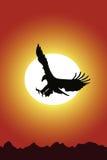 Aigle et coucher du soleil Images stock