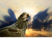 Aigle et coucher du soleil Photo stock