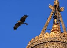 Aigle et tour Photos libres de droits