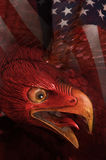 Aigle fâché image stock