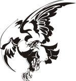 Aigle - oiseau prédateur. Images libres de droits