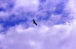 Aigle sur le ciel Photographie stock