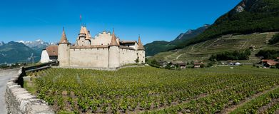Aigle, VD / Switzerland - 31 May 2019: panorama landscape view of Chablis vineyards and grapevines and Aigle Castle in the Rhone. Valley in the Swiss Alps stock photo