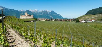 Aigle, VD / Switzerland - 31 May 2019: panorama landscape view of Chablis vineyards and grapevines and Aigle Castle in the Rhone. Valley in the Swiss Alps royalty free stock photography