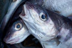 Aiglefins Photo stock