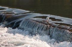 Aigrette bij waterval Royalty-vrije Stock Afbeeldingen