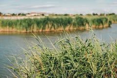 Aigues-Mortes, Salins du Midi, kleurrijk landschap met zoute moerassen Royalty-vrije Stock Foto's