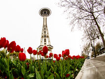 Aiguille de l'espace de Seattle avec des tulipes Photos stock