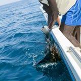 Aiguille de mer de crochet de pélerin sportfishing tenant la facture Photos stock