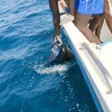 Aiguille de mer de crochet de pélerin sportfishing tenant la facture Images libres de droits