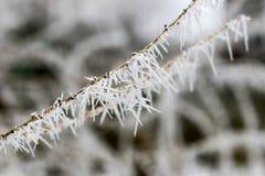 Aiguilles de Frost Photographie stock