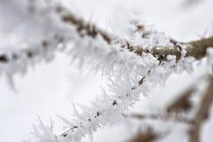 Aiguilles de glace Photos libres de droits