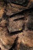 Aiguilles de mélèze sur les roches texture et fond Photos libres de droits