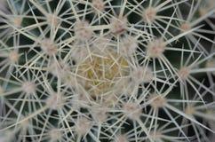 Aiguilles micro de cactus Photos libres de droits