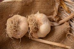 Ail blanc en ingrédient de panier pour la nature organique végétale végétarienne d'agricolture de nourriture photo libre de droits