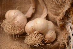 Ail blanc en ingrédient de panier pour la nature organique végétale végétarienne d'agricolture de nourriture image stock