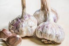 ail organique délicieux faisant cuire des préparations image stock