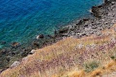 Ail sauvage s'élevant près de la mer, Monemvasia, Grèce Photographie stock libre de droits