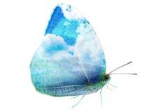 Aile de ciel de papillon d'isolement Photographie stock