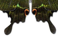 Aile de papillon Photographie stock libre de droits