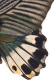 Aile de papillon photo stock