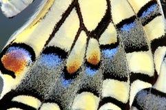Aile de papillon de machaon, vers le haut de fin images libres de droits