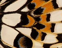 Aile de papillon, fond Photo stock