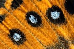 Aile de papillon, Madame peinte, Vanessa Kershawi Image stock