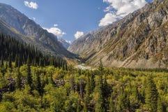 Aile du nez Archa au Kirghizistan Photo stock