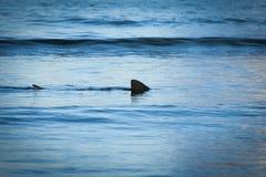 Aileron d'un requin en haute mer Photo stock