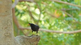 Aileron dans le nid sur le haut arbre clips vidéos