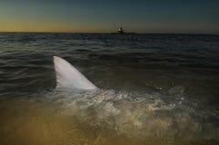 Aileron de requin en surface dans l'océan avec le kayak Images stock