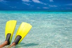 Ailerons naviguants au schnorchel sur un banc de sable Images libres de droits