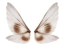 ailes photo libre de droits